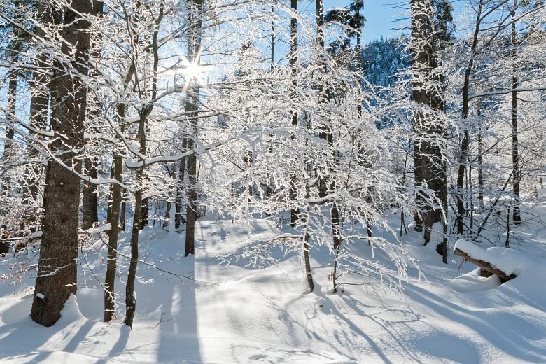 Fototapete Wintermotiv Am Herzogstand Tapeterie