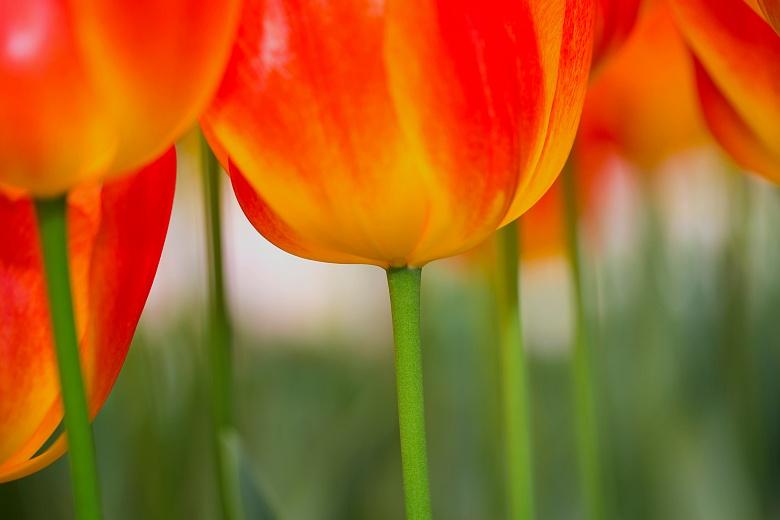 Blütenkelche