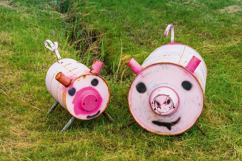 Dosenschweine auf einer Nordfriesischen Insel