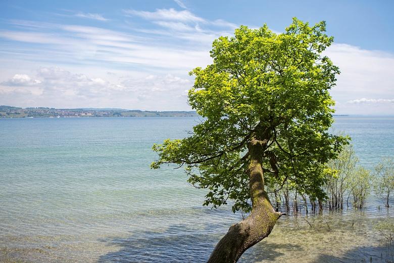 Baumstamm am Ufer Ludwigshafen