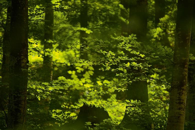 Frühlingsgrün von Dagmar Schneider