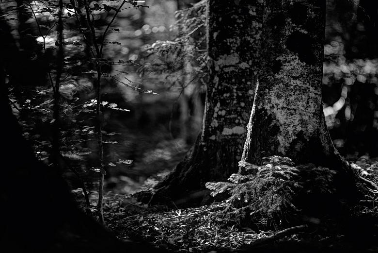 Nachtwald von Dagmar Schneider