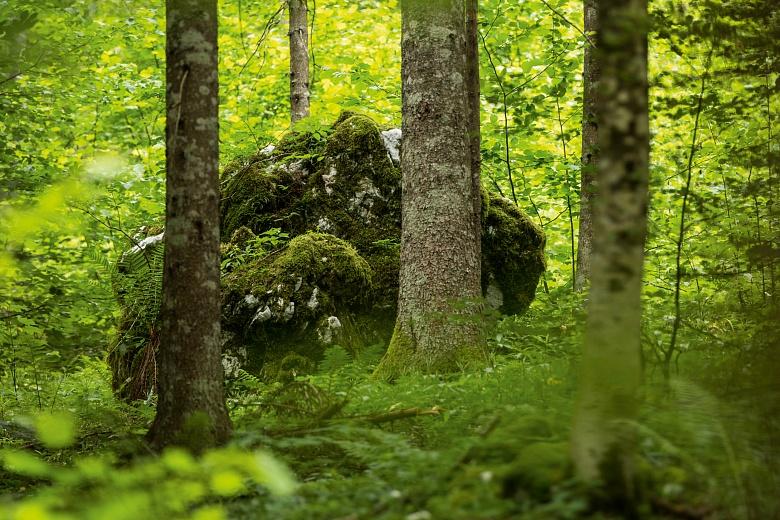 Hiding in plain sight von Dagmar Schneider