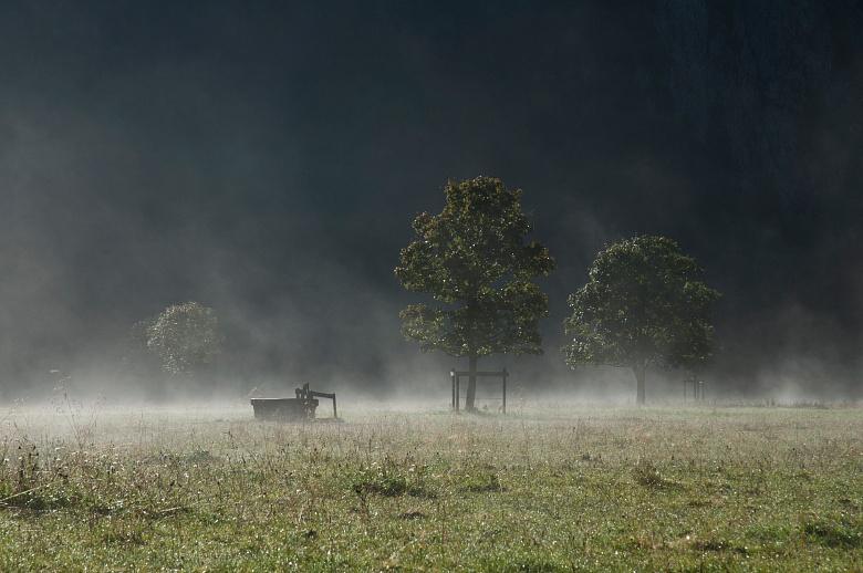 Morgendliches Dampfbad von Dagmar Schneider