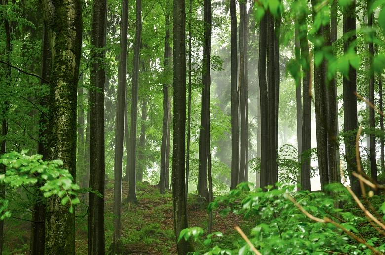 Buchenwald im Regen von Dagmar Schneider