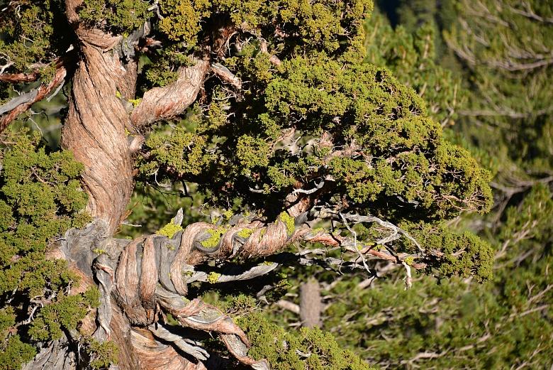 Wald im Tuolumne Meadows im Yosemite National Park