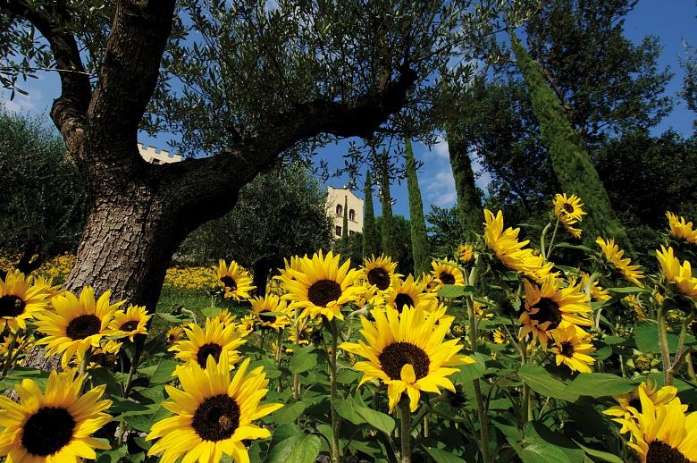 Sonnenblumen und Schloss