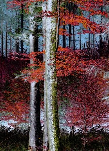 A Part Of Autumn