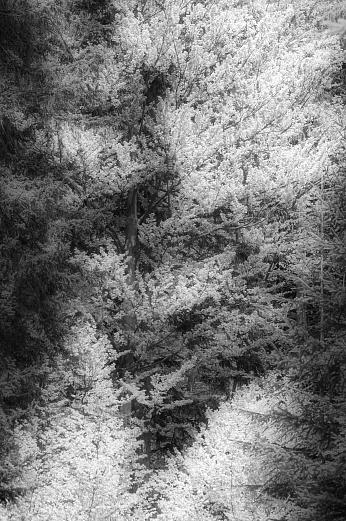 ... den Wald vor lauter Blätter nicht … von Dagmar Schneider