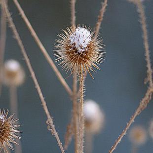 Natur-Details