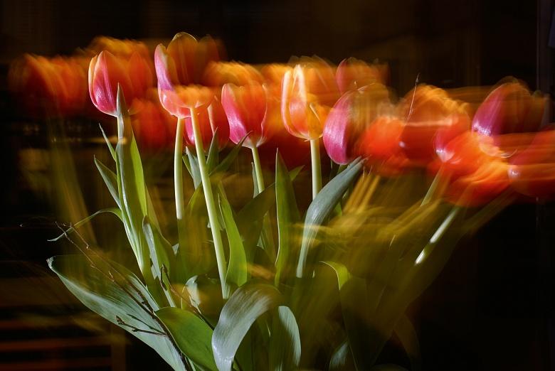 Bewegte Tulpen