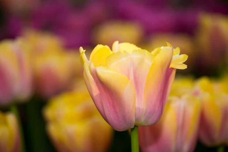Schönheit in gelb