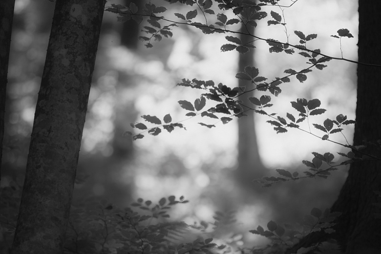 Sommer im Wald von Dagmar Schneider
