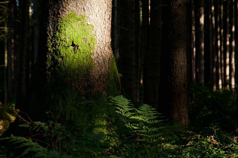 Licht im Wald von Dagmar Schneider
