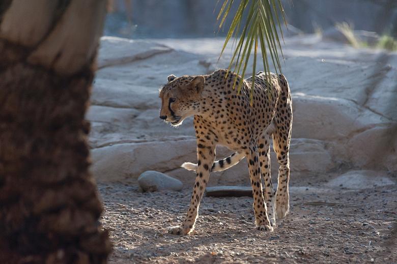 Sharjah Schardscha Sharjah Desert Park